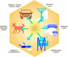Pengertian Bioteknologi Konvensional - Sederhana