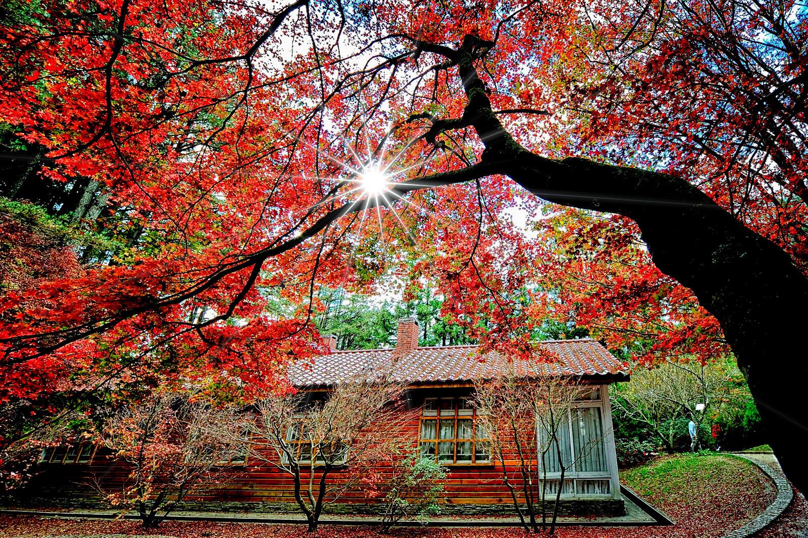 「福壽山農場 楓」的圖片搜尋結果