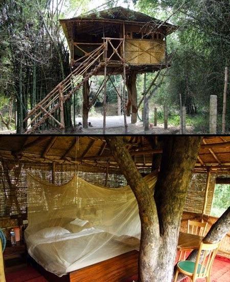 Tree House Hotel [lensaglobe.com]