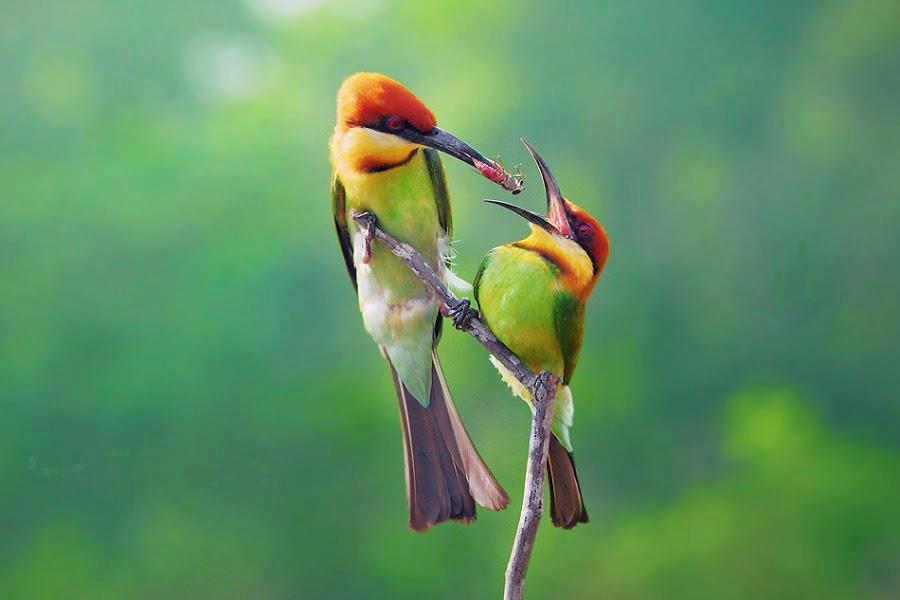Mother Bird Feeding Her Baby