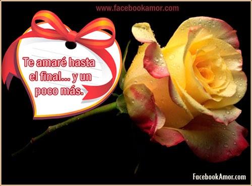 imagenes de flores de rosa para facebook