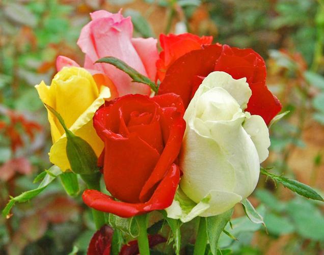 my dear friend very good morning