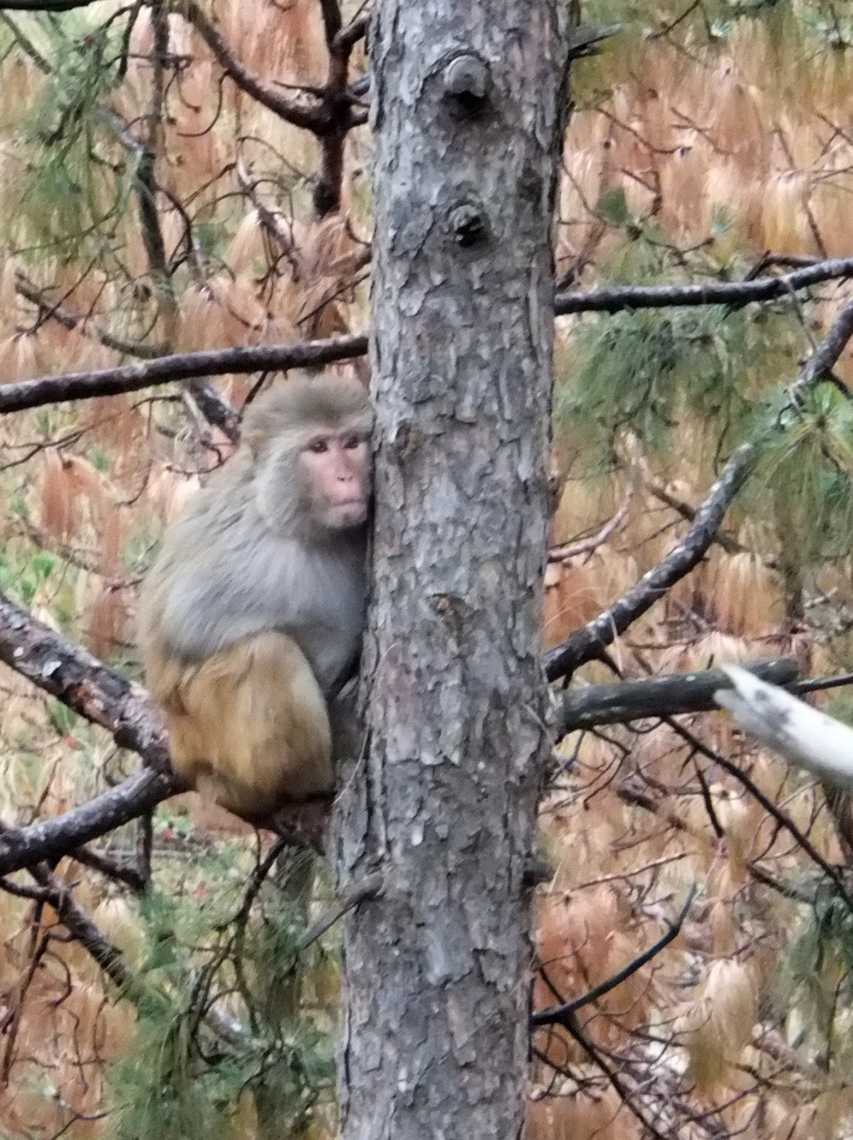 обезьяна готовится ко сну