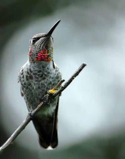 Foto Burung Kolibri Berwarna