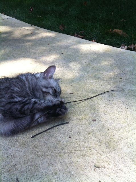 Simon playing with a stick