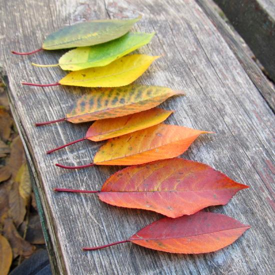 Autumn rainbow, радуга из листьев