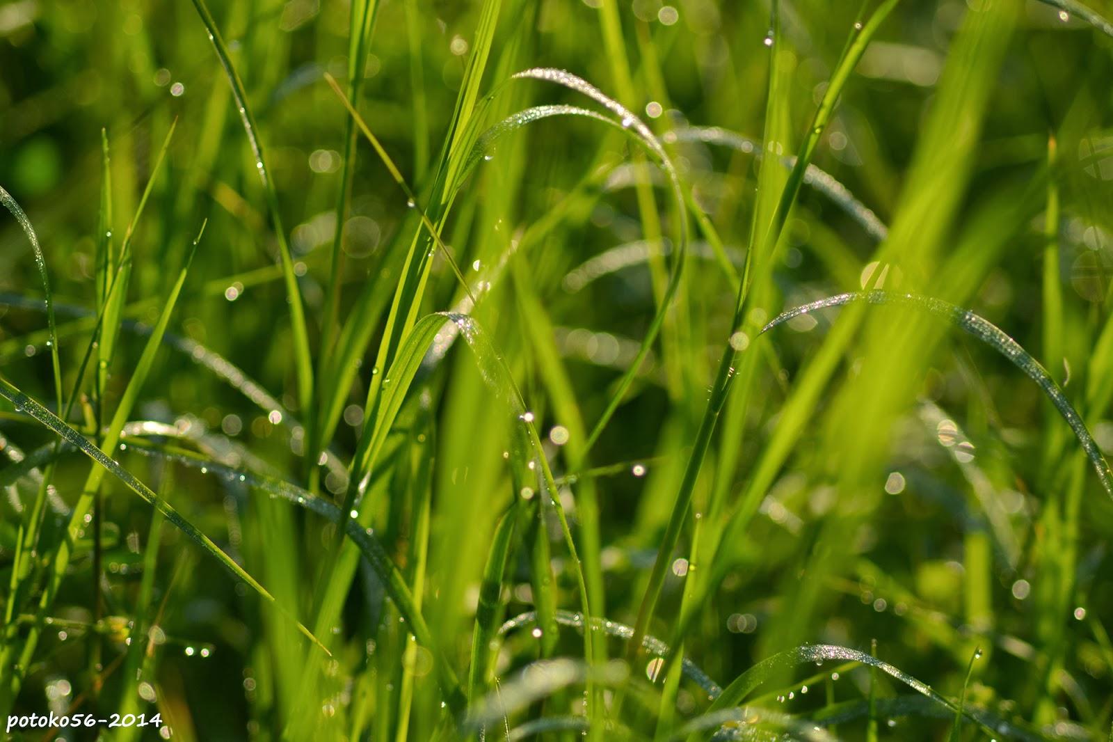 lluvia fina sobre el cesped