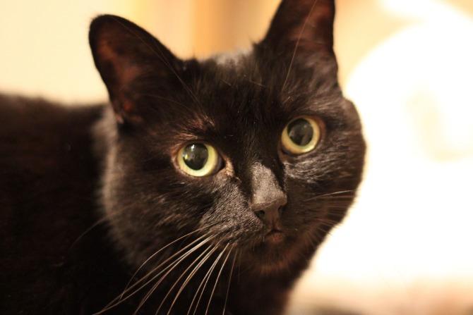 A close up of Matilda