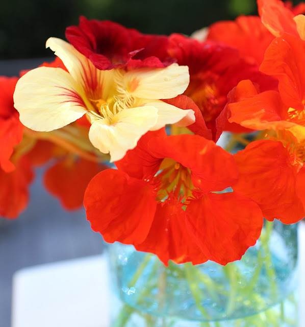 The Garden Appreciation Society -- The Impatient Gardener -- nasturtiums