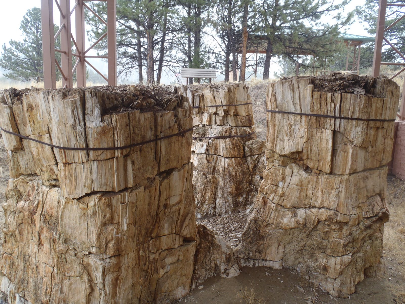 Florissant Fossil Beds National Monument | Colorado Travel