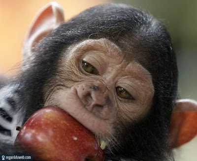 Images comiques et extraordinaires Animal - Singe v32 ...