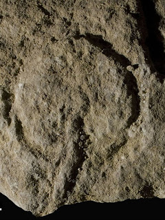 arte rupestre Abri Castanet