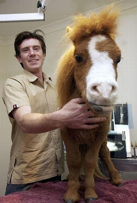 Charming Miniature Horse Koda Seen On www.coolpicturegallery.us