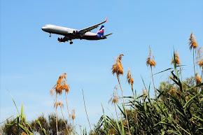 Els avions del nostre Gran CATàleg pràctic d'Ornitologia d'Acer del CAT de Setmana