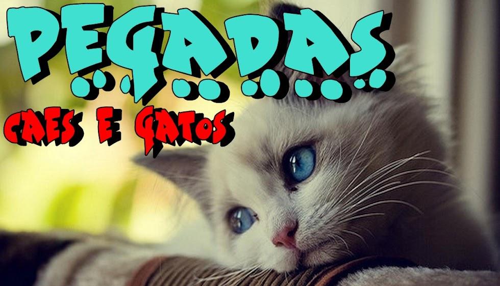 Pegadas Cães e Gatos
