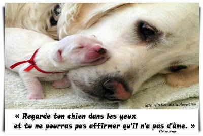 Citation sur chien
