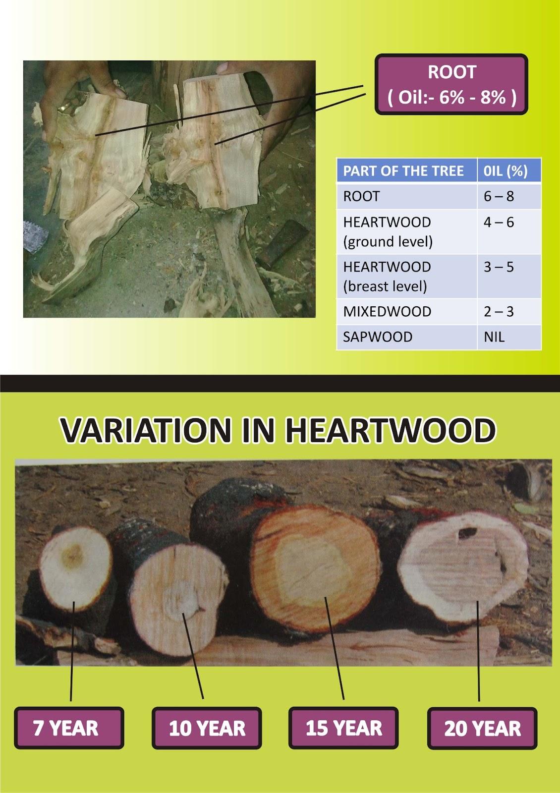 Chandan ni kheti chandan ni kheti sandalwood farming for Asia asian cuisine richmond hill menu
