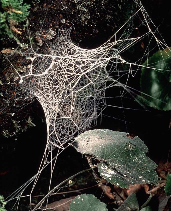 Real monstrosities lampshade spider image jonathan coddington aloadofball Gallery