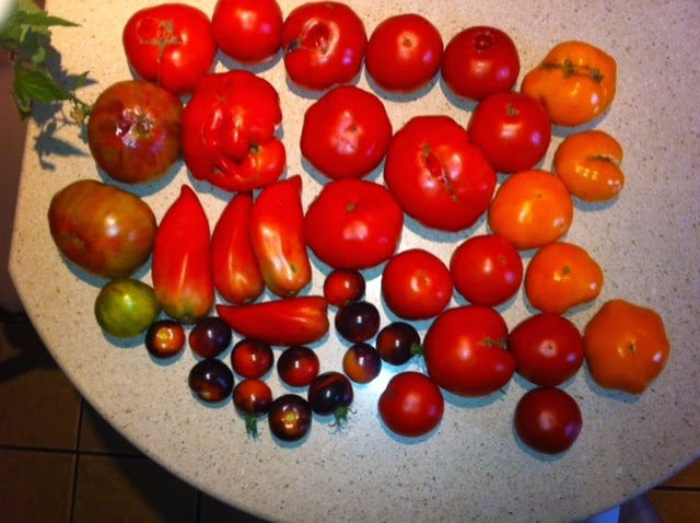 Tomatoes from my Garden