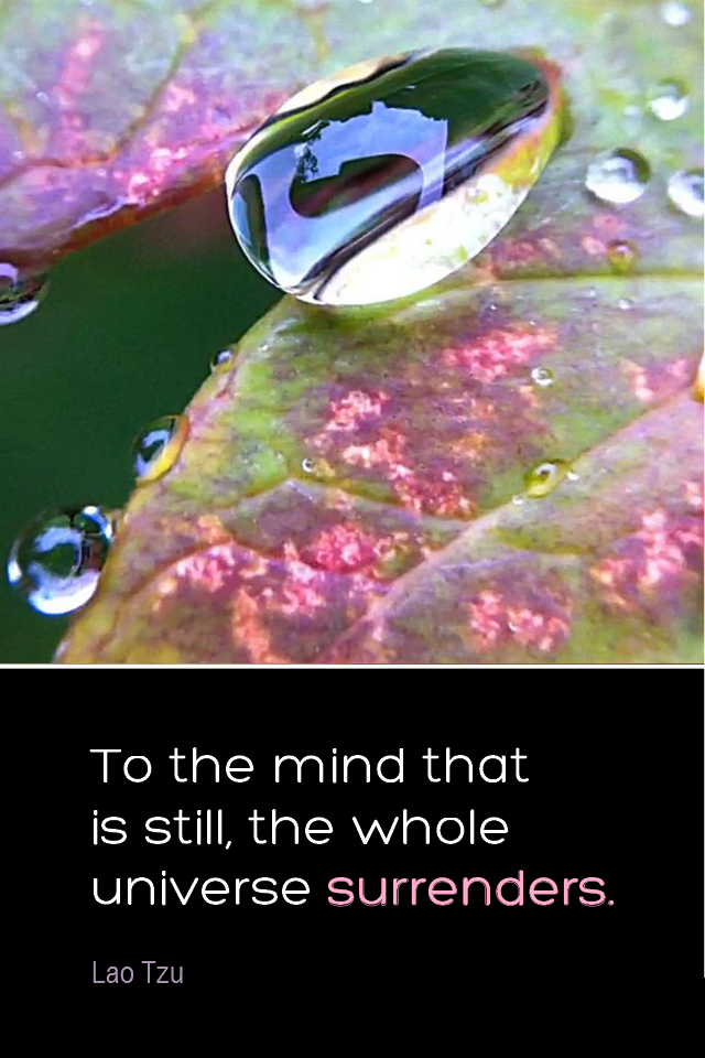visual quote - image quotation for MEDITATION - To the mind that is still, the whole universe surrenders. - Lao Tzu