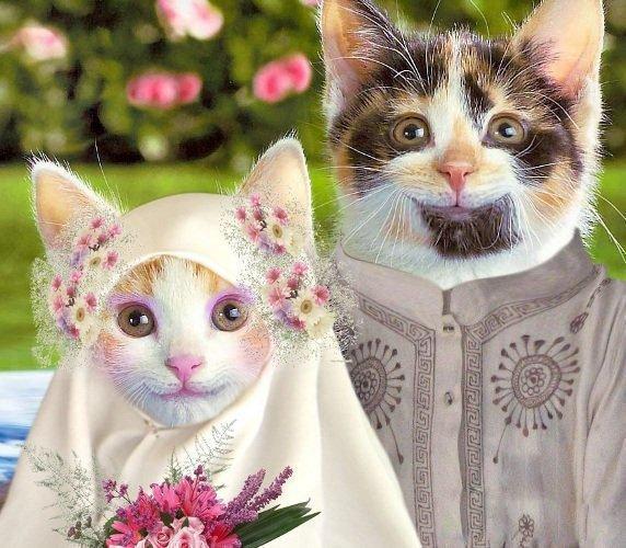 Cat pussy wallpaper