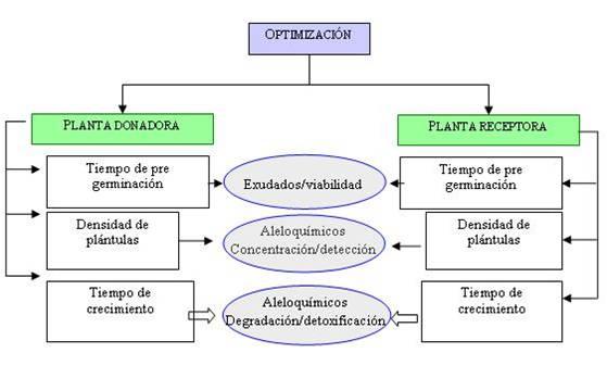 Alelopatias for Alelopatia en hortalizas