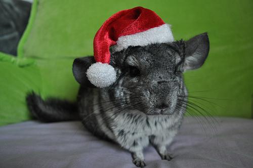 Cute christmas animals - photo#10