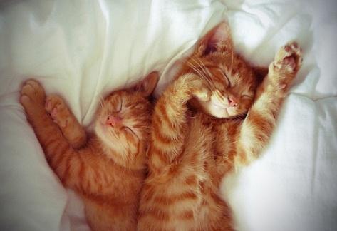 Gambar Kucing Tidur 3