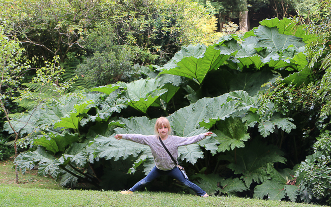 Gunnera at Trebah Garden, Mawnan Smith Cornwall by Alexis www.somethingimade.co.uk
