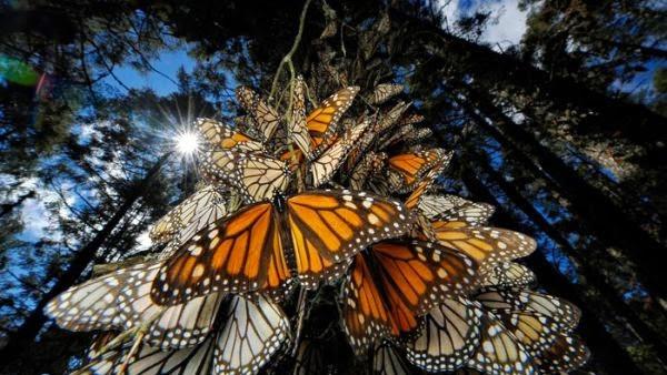 Fenomena Alam Paling Menakjubkan