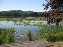 Vernonia Lake ...