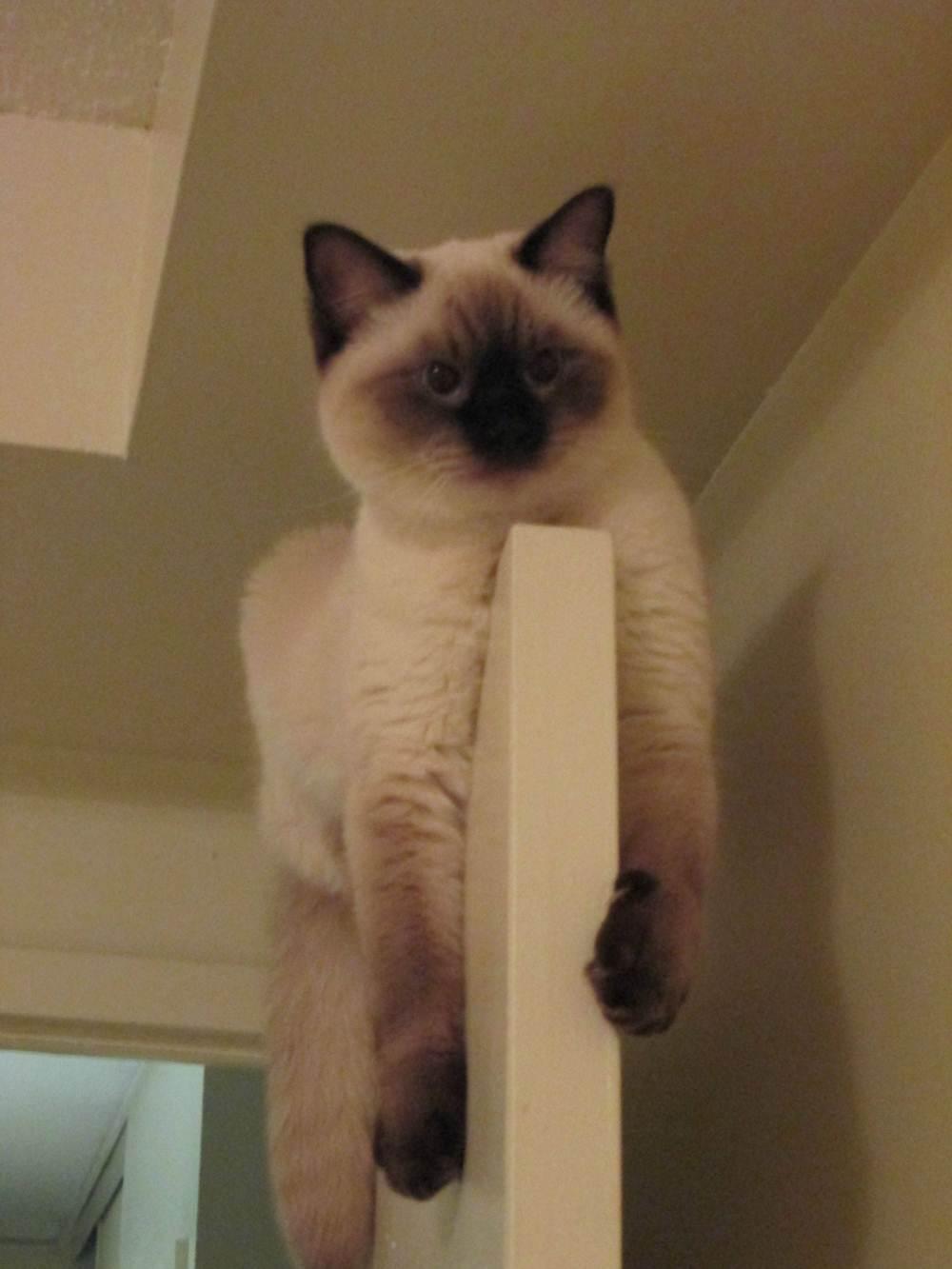Сумасшедшие коты, фото 11