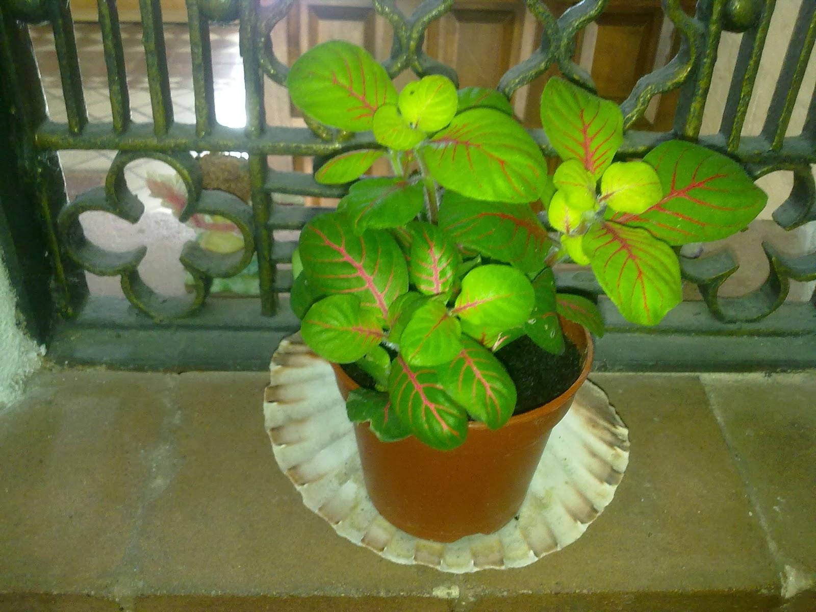 Que plantas poner en el interior de mi casa for Como decorar el interior de mi casa