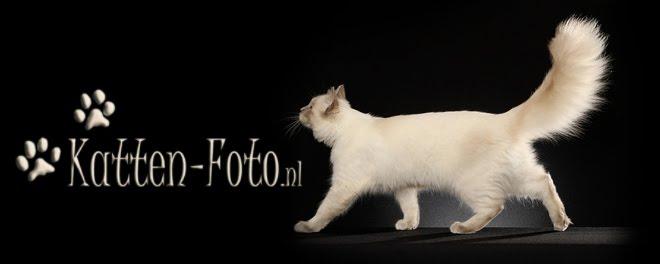 Katten-Foto