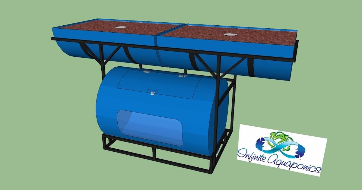 Jerry more 55 gal drum aquaponics for Tp fish market