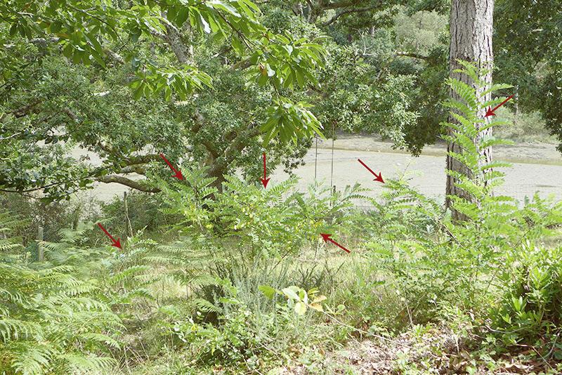 Le jardin des d butantes un retour de vacances d primant - Comment supprimer le liseron au jardin ...