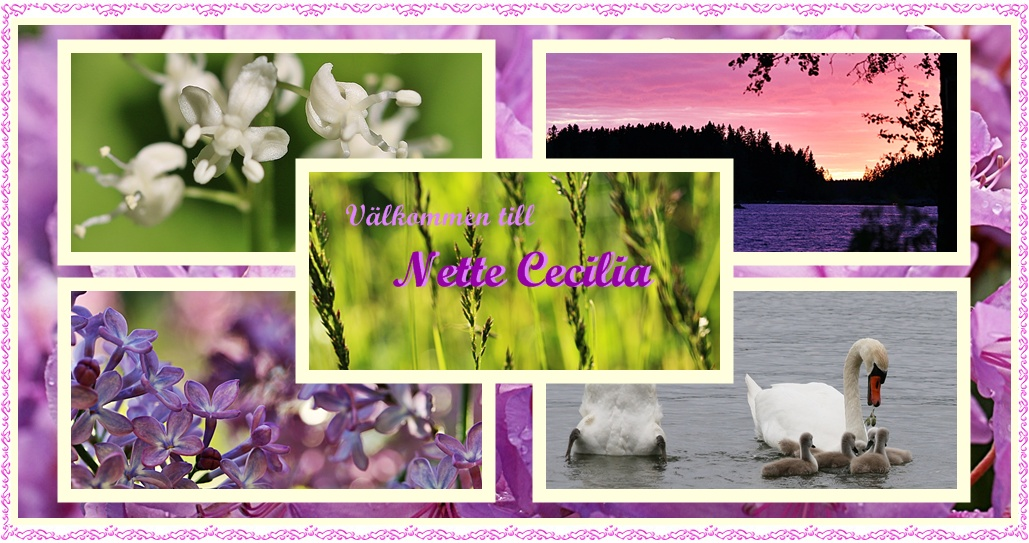 Välkommen till Nette Cecilia