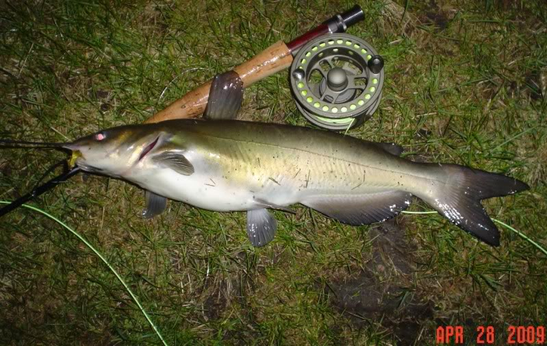 Canal catfish fishing in for Canal bait and tackle fishing report