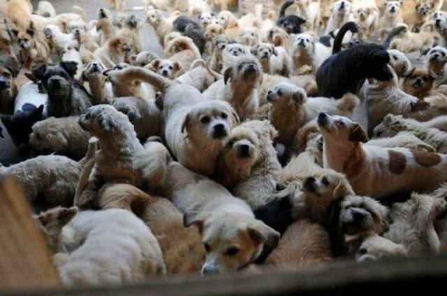 Brokers Near Me >> Puppy Mill Awareness Southeast Michigan: May 2012