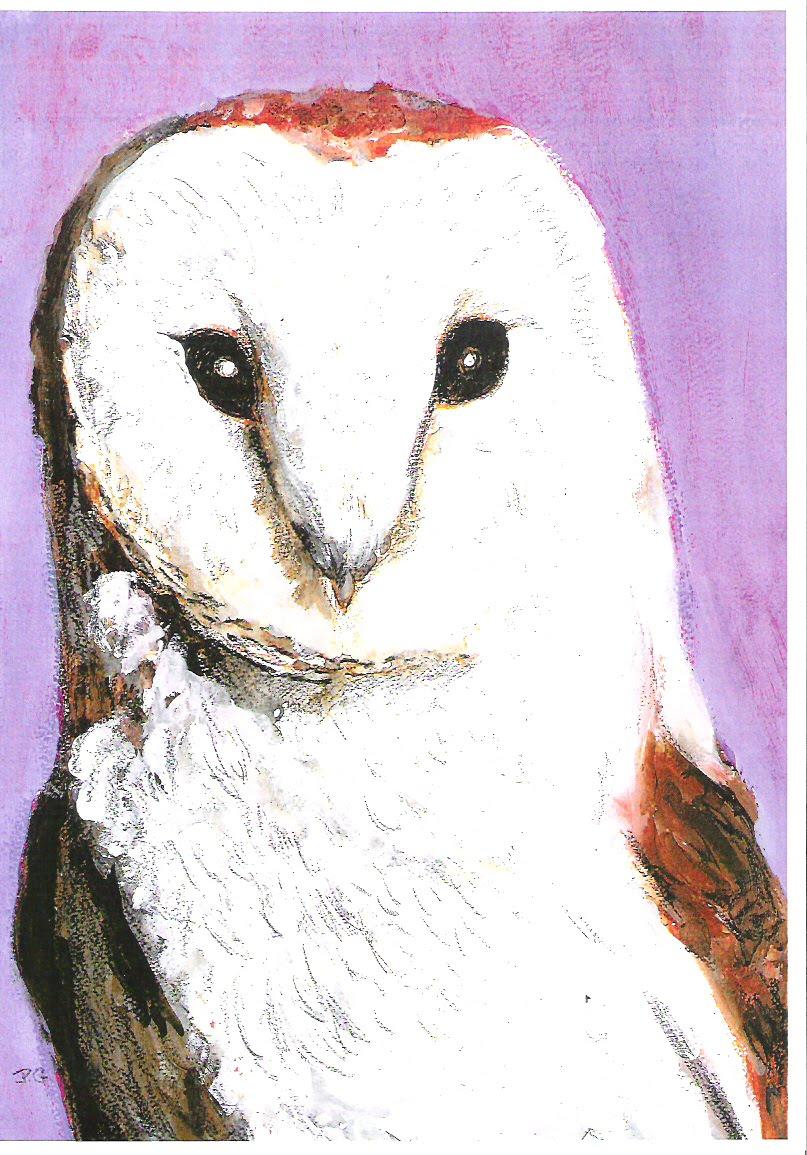 Barn Owl pic