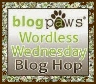 blogpaws worldess wednesday