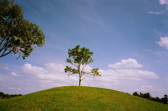 Blaxland Riverside Park Sydney Natura Classica Fujifilm Natura1600