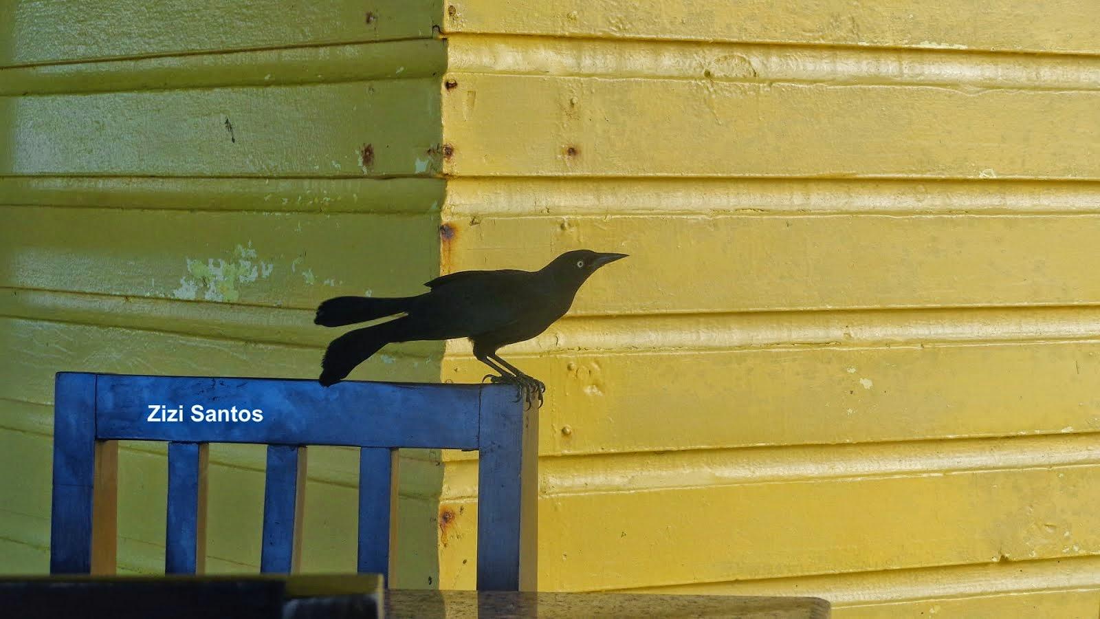 Atos sao pássaros engailoados,  sentimentos são passaros em vôo.