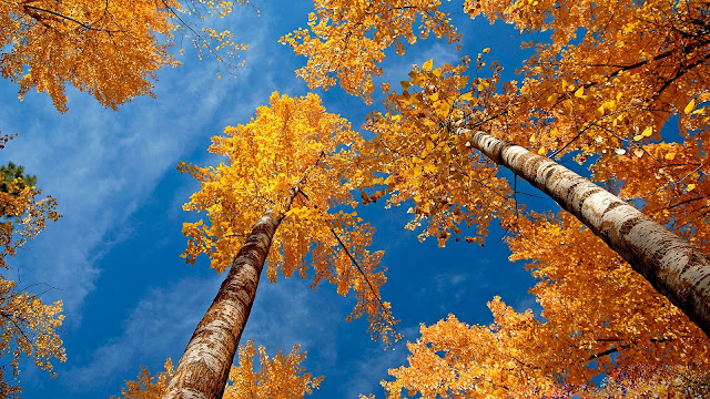 Autumn Yellow Branches HD Wallpaper