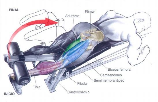 Os melhores ou principais aparelhos para treinar pernas for Exercicio para interno de coxa