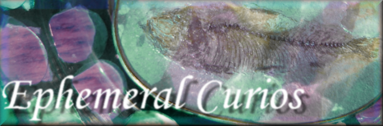 Ephemeral Curios