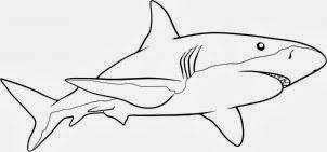 Tubarão Desenhos de Animais para Colorir