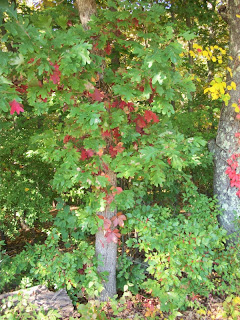 Leaves changing color
