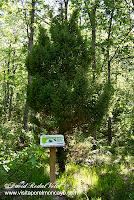 Moncayo AG-2 Itinerario Botánico sendero senderismo enebro común