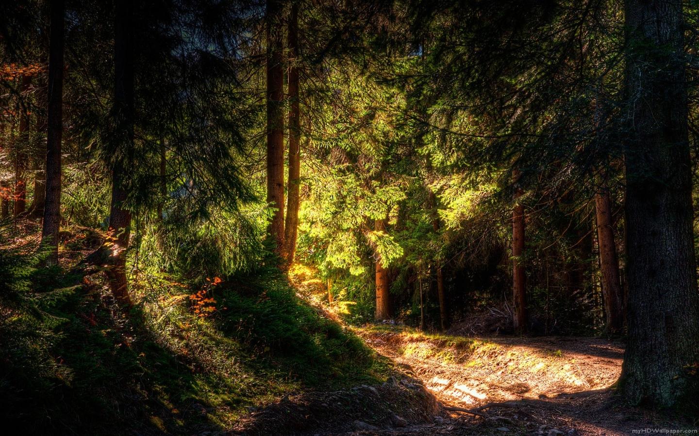 http://2.bp.blogspot.com/-dEEefJmWXEs/TqCND2_Af9I/AAAAAAAAAE8/8UCfdy5zlkw/s1600/high-def-forest-green-wallpaper.jpg